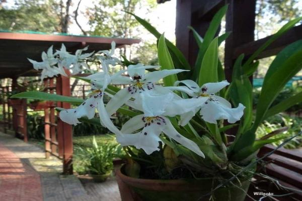Orchid Watching